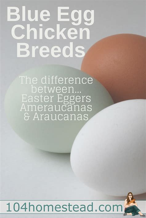 what color are blue eggs blue egg chicken breeds
