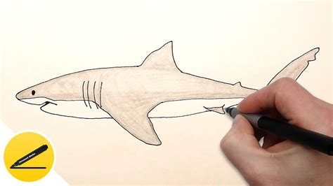u esy how to draw a shark step by step easy for beginners youtube