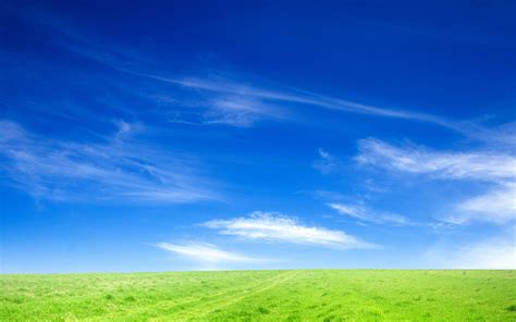 blue sky  green grass wallpapers hd wallpapers id