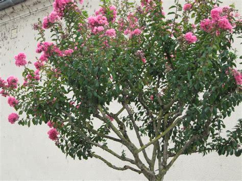 Arbres Fleurs Roses by Arbre Fleuri
