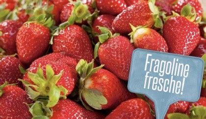 vaso per fragole fai da te orto sul balcone come coltivare le fragole in vaso leitv