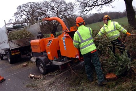 chipper club try to recycle your christmas tree and cards