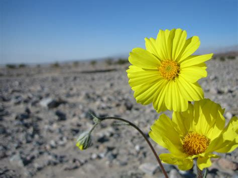 desert flower oct 27 the desert flower diary of the 17th man