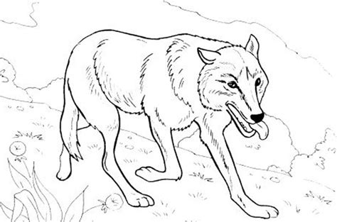 Print Download Realistic Wolf Coloring Pages Hard Realistic Wolf Coloring Pages