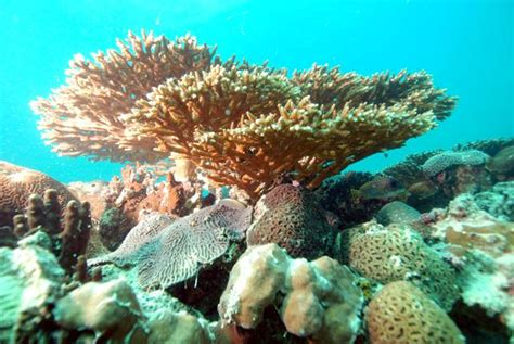 adsense uae survival of corals in the hottest reefs reefland com