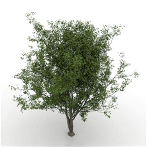 free tree model cherry tree 3d model free 3d models