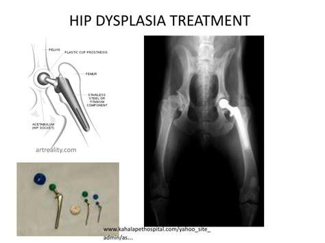 hip dysplasia surgery ppt poor conformation hip dysplasia powerpoint presentation id 2170404