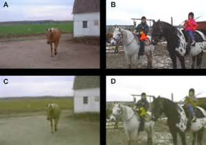 what colors do horses see vision in horses more than meets the eye features