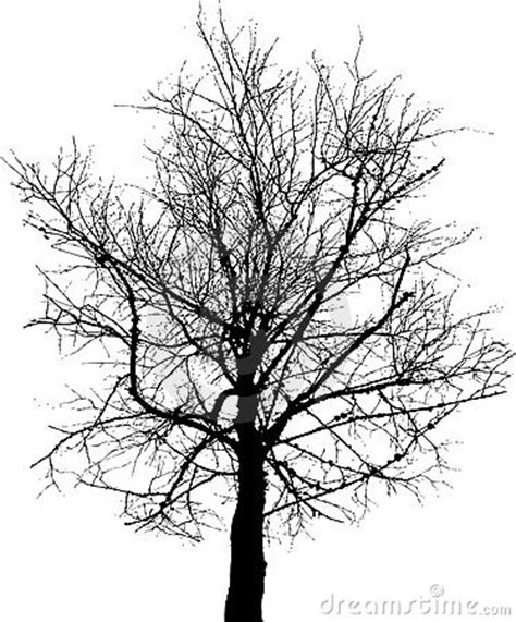 Maple Hitam black tree stock photo image 4774600