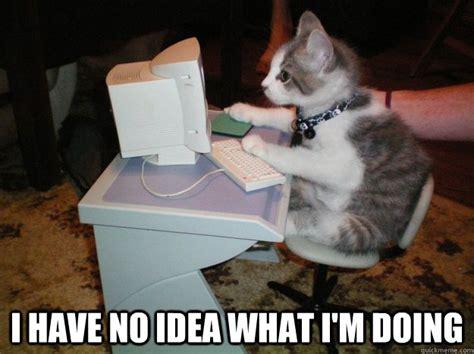 Cat Laptop Meme - i have no idea what i m doing cat computer quickmeme