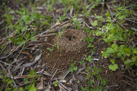Ameisen Im Rasen Vertreiben 3069 by Ameisen Blattl 228 Use Vertreiben Und Tipps Mein Sch 246 Ner