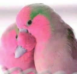 pink lovebirds want i never seen guys