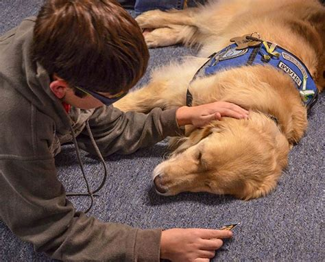 what is a comfort dog comfort dogs god s gifts in times of turmoil lcms