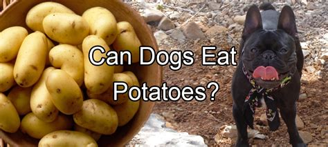 dogs eat potatoes pethority dogs the authority for all your needs