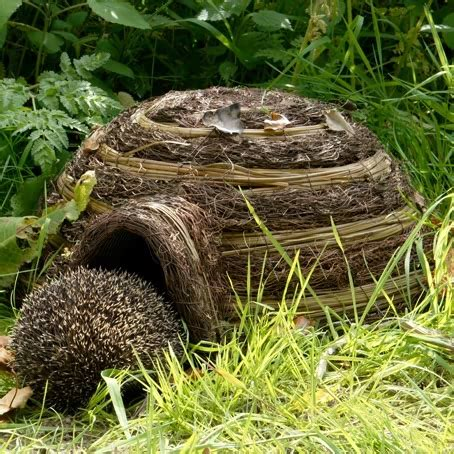 hedgehog houses to buy buy hedgehog house igloo online birds bees