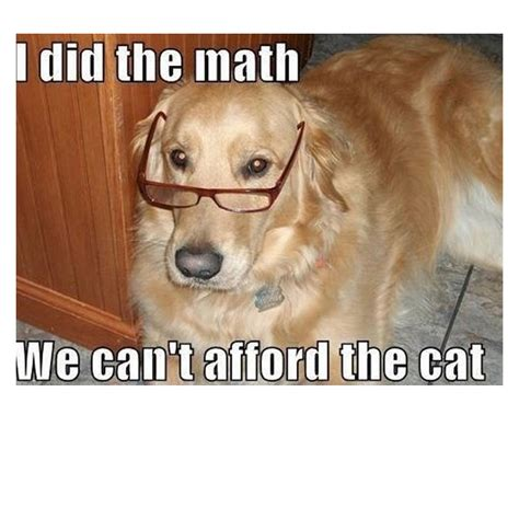 Dog Funny Meme - funny dog memes pictures to pin on pinterest pinsdaddy