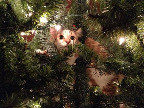 funny cats in christmas trees cats part 81 40 pics 10 gifs amazing creatures