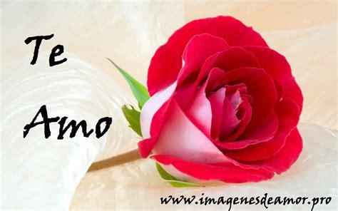 imagenes de flores whatsapp 14 imagenes de hermosas rosas con frase te amo