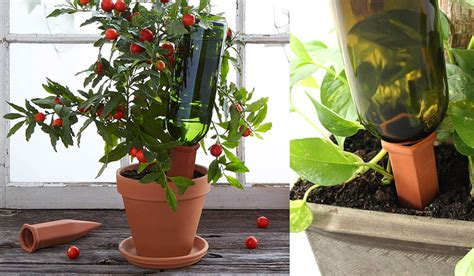 how to keep house plants alive when traveling organic