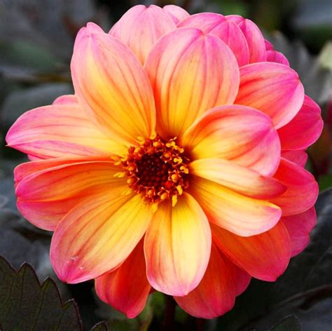 imagenes flores pintadas im 225 genes arte pinturas flores pintadas 211 leo