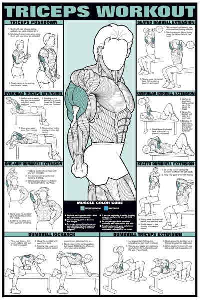 arm exercise workout chart triceps arm workout wall