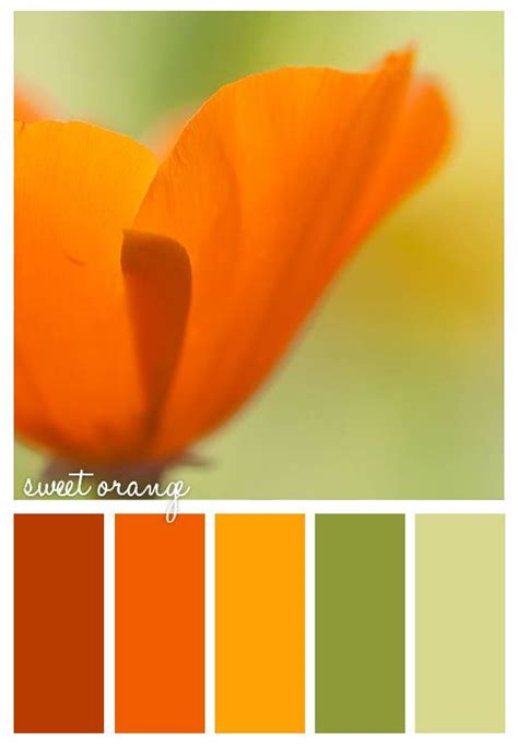 color combination with orange 17 best ideas about orange color schemes on pinterest
