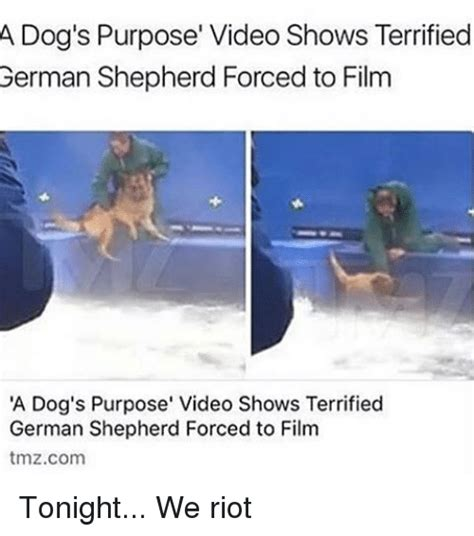 a s purpose german shepherd memes of 2017 on sizzle the internets