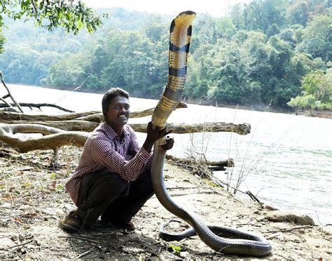 film ular kobra india panoramio photo of vava suresh with king cobra