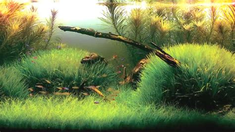 aquascaping with driftwood aquascape with clever use of various plants and driftwood