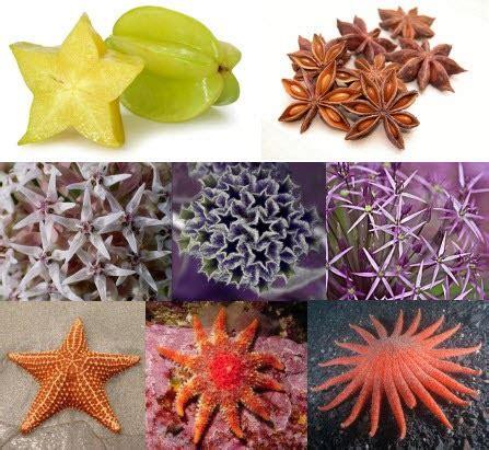 imagenes de formas naturales figuras y formas geometricas ejemplos y aplicaciones