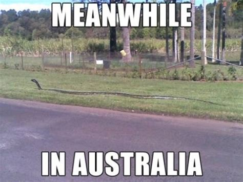 Aussie Memes - thinking about moving to australia australia uncovered