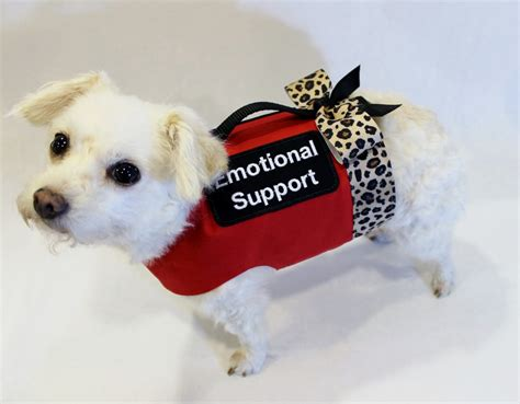 emotional support emotional support in northern virginia northern virginia