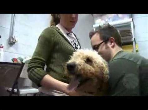 animal house huntley northwest herald do your job animal house shelter huntley mp4 youtube