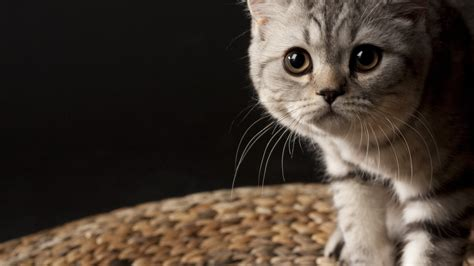 cat background hd cat wallpapers 1920x1080 69 images