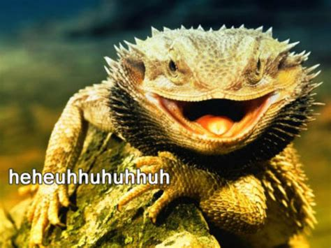 Laughing Lizard Meme - laughing lizard memes