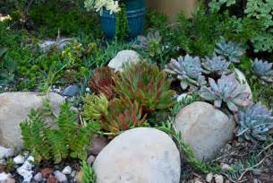 tips for a water wise garden