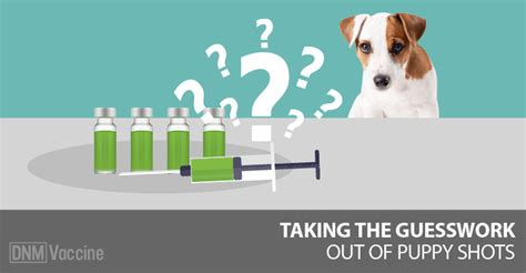 how much are vaccinations for puppies taking the risk out of puppy dogs naturally magazine