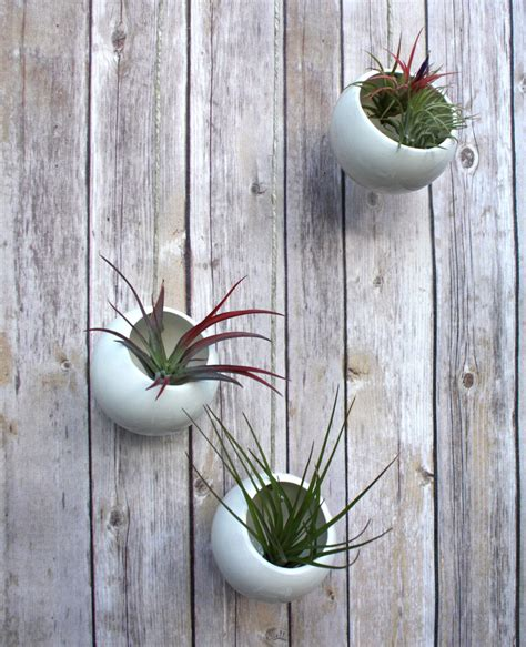 Large Concrete Planter How To Care For The Lovely Air Plants That Adorn Your Home