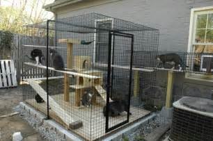 Cat Patio Cat Enclosure Idea Side Yard Pet Outdoor Plays