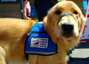How To Get A Service Dog For Ptsd Veterans by 8 Types Of Service Dogs We Should Be Grateful For