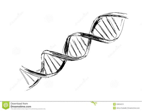 dna stock vector image of chain biology healthcare