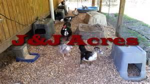 duck house chicken coop and other poultry coop bedding