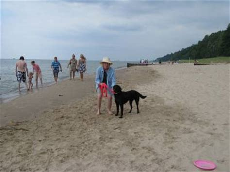 friendly beaches in michigan best pet friendly travel tips