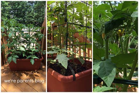 Gardeners Supply Tomato Success Kit Growing Green A Gardener S Supply Company Organic Tomato