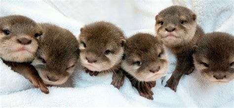 cutest on earth cutest baby animals in the world pictures to pin on