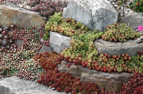 Beautiful Rock Gardens Beautiful Rock Garden Topiray Garden Plants