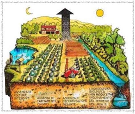 co dei fiori fazi l orto a scuola tante esperienze scolastiche significative