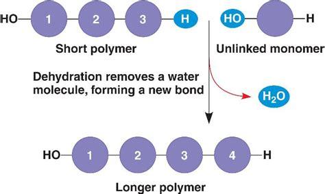 hydration vs dehydration reaction knowledge class large organic molecules