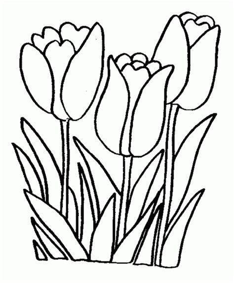 coloring page wallpaper flowers coloring pages hd background wallpaper 26 high