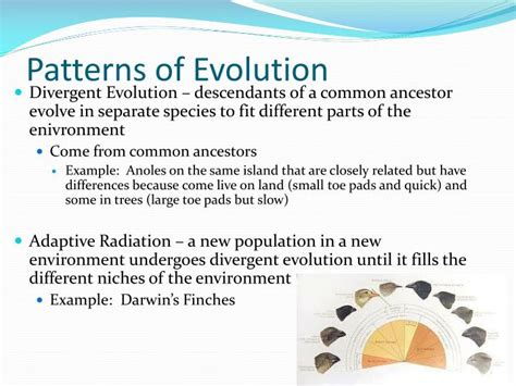 pattern component theory of evolution ppt evolution in action powerpoint presentation id 2365581
